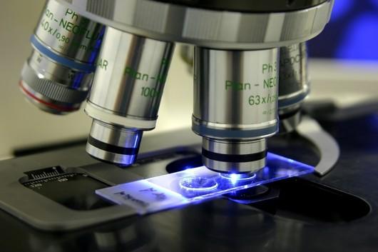 Forschen am Mikroskop